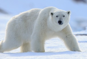 "Chinese ""polar bear hotel"" opens to full bookings and criticism"